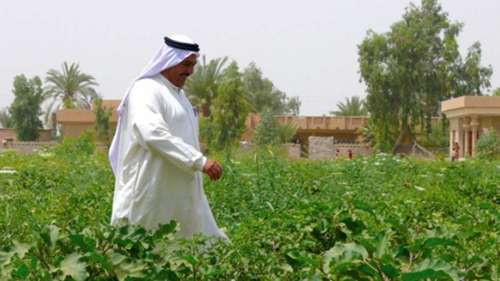 agri-livelihoods in Iraq