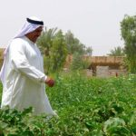 agri-livelihoods in Iraq